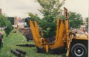 New plantings at Matthews Park 1994.